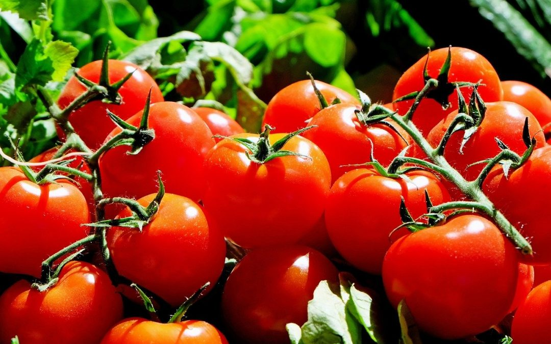 10 TOP TOMATO FACTS